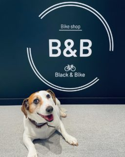 At @black_and_bike, we are pet-friendly 🐶  Remember the last time Happy came to see us, it fell in love with the @ride_bmc bikes 🤍  #doggie #petfriendly #blackandbike